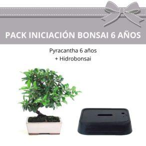Pack-Iniciacion-Bonsai-Pyracantha-6-anos