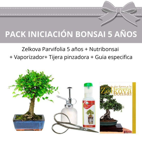 Pack-Iniciacion-Bonsai-Zelkova-Parvifolia-5-anos
