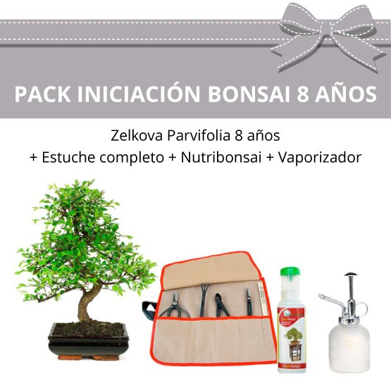 Pack Iniciacion Bonsai Zelkova Parvifolia 8 anos