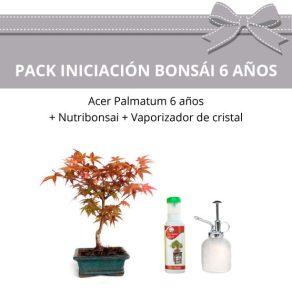 Pack-Iniciacion-Bonsai-acer-palmatum-6-anos