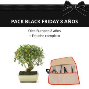 Pack-black-friday-Bonsai-Olea-europea-8-anos