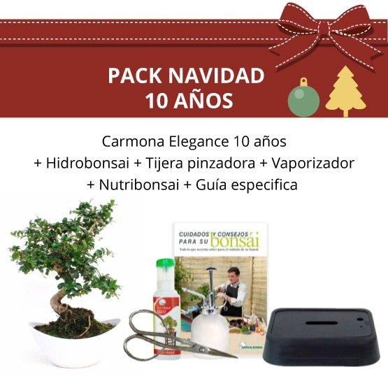 Pack Navidad Bonsái Carmona Elegance 10 años