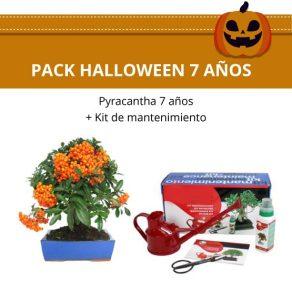Pack Halloween Bonsái Pyracantha 7 años