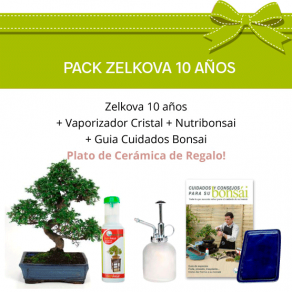 PACK BONSAI ZELKOVA 10 ANOS
