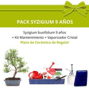 PACK-Bonsai-Syzigium-buxifolium-9-anos-kit-mantenimiento
