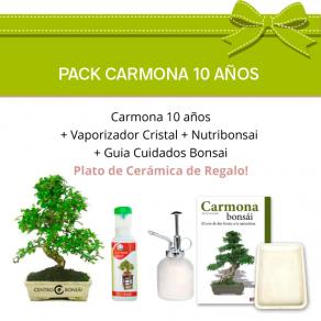 Pack Bonsái Carmona 10 años