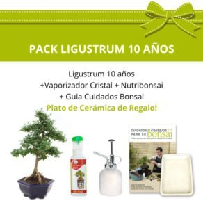 Pack-Bonsai-10-anos-Ligustrum