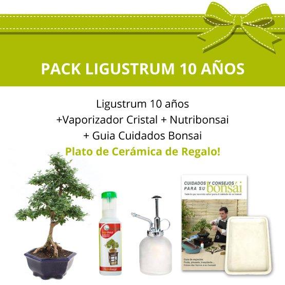 Pack-Bonsai-10-anos-Ligustrum