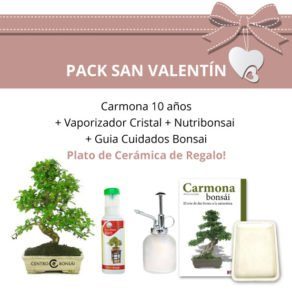Pack-San-Valentin-Bonsai-10-anos-Carmona