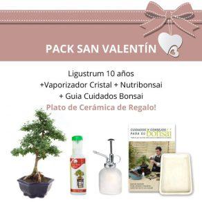 Pack-San-Valentin-Bonsai-10-anos-Ligustrum