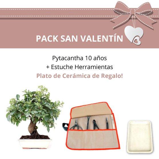 Pack-San-Valentin-Bonsai-12-anos-Pyracantha
