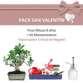 Pack San Valentin Bonsai 8 anos Ficus Retusa