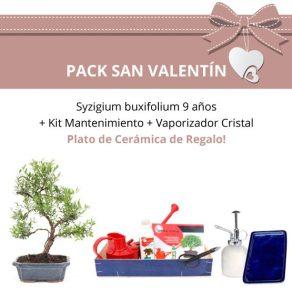 Pack San Valentin Bonsai 9 anos Syzigium Buxifolium
