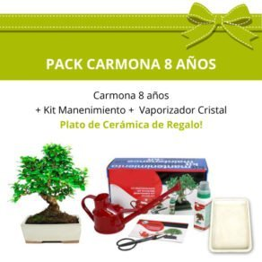 Pack bonsai carmona microphylla 8 anos-
