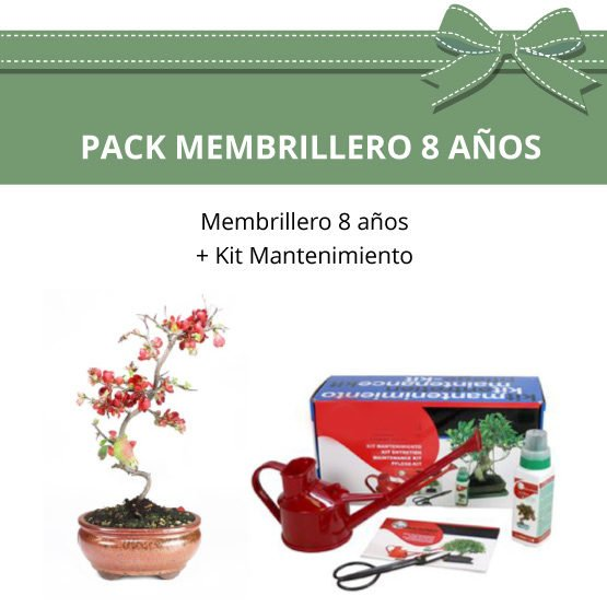 Pack-Bonsai-8-anos-membrillero
