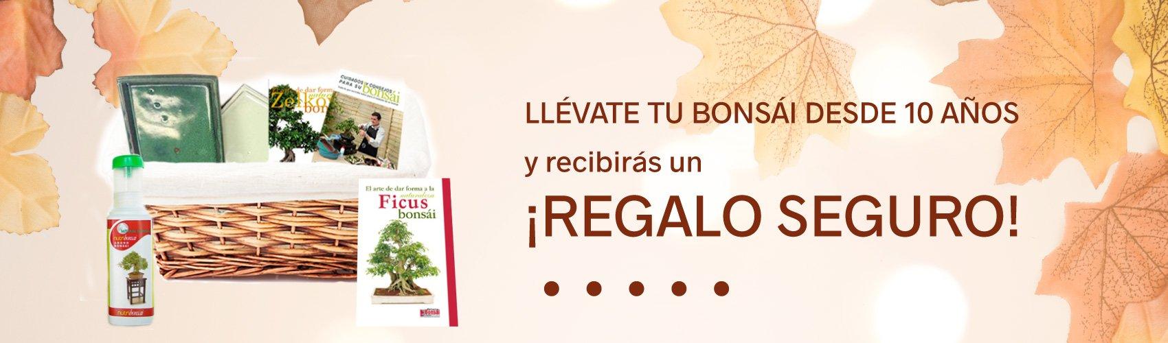 bonsai-promocion-otono-slider4