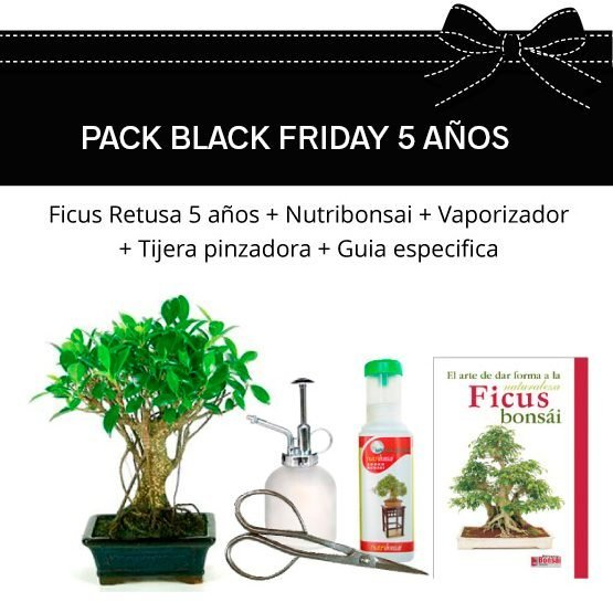 PACK-BLACK-FICUS-5