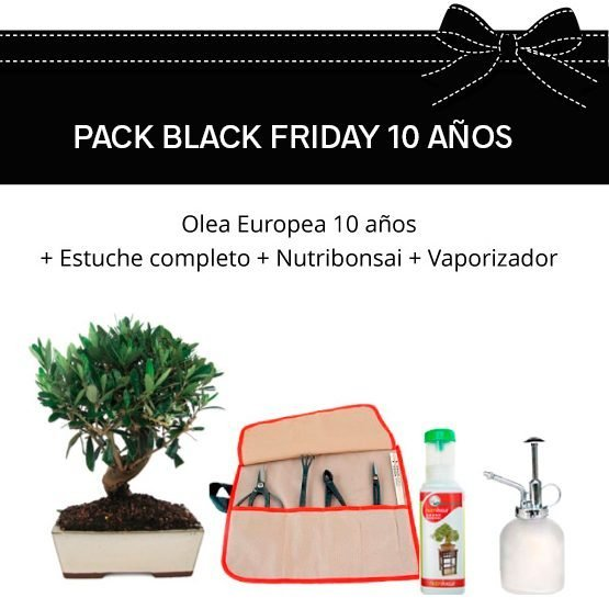 PACK-BLACK-FRIDAY-OLEA-10-COMPL