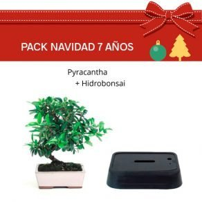 Pack Bonsái Pyracantha 7 años