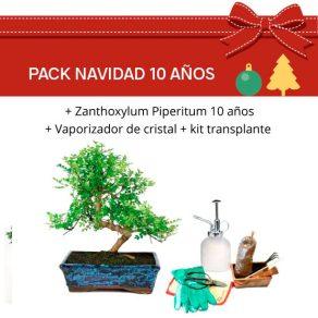 Pack Bonsái Zanthoxylum Piperitum 10 años