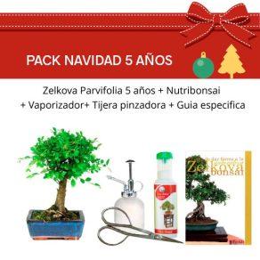 Pack Bonsái 5 años Zelkova Parvifolia