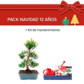 Pack Bonsái Syzigium Buxifolium 12 años con Kit mantenimiento