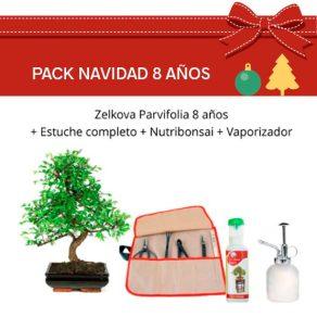 Pack Bonsái Zelkova Parvifolia 8 años
