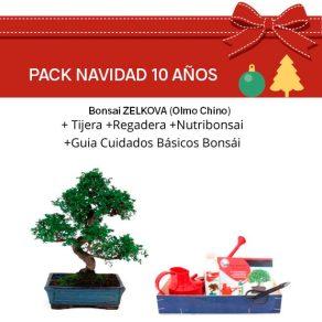 Pack Bonsái Ficus Retusa 10 años