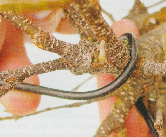 alambrado-del-bonsai