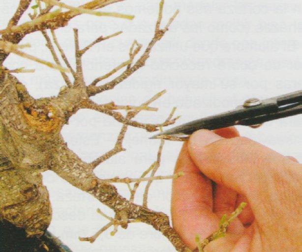 como-alambrar-un-bonsai