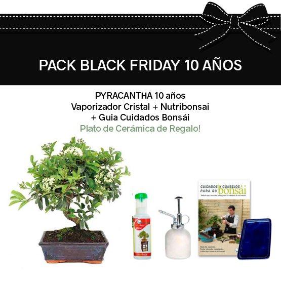 pack Black Friday Bonsai Pyracantha 10 años