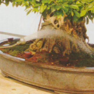 tiempo-de-regado-de-un-bonsai