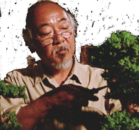 Bonsái 10 años Juniperus chinensis bonsai miyagi